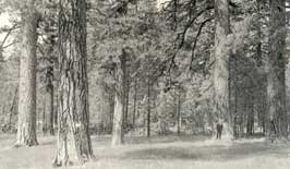 old-forest