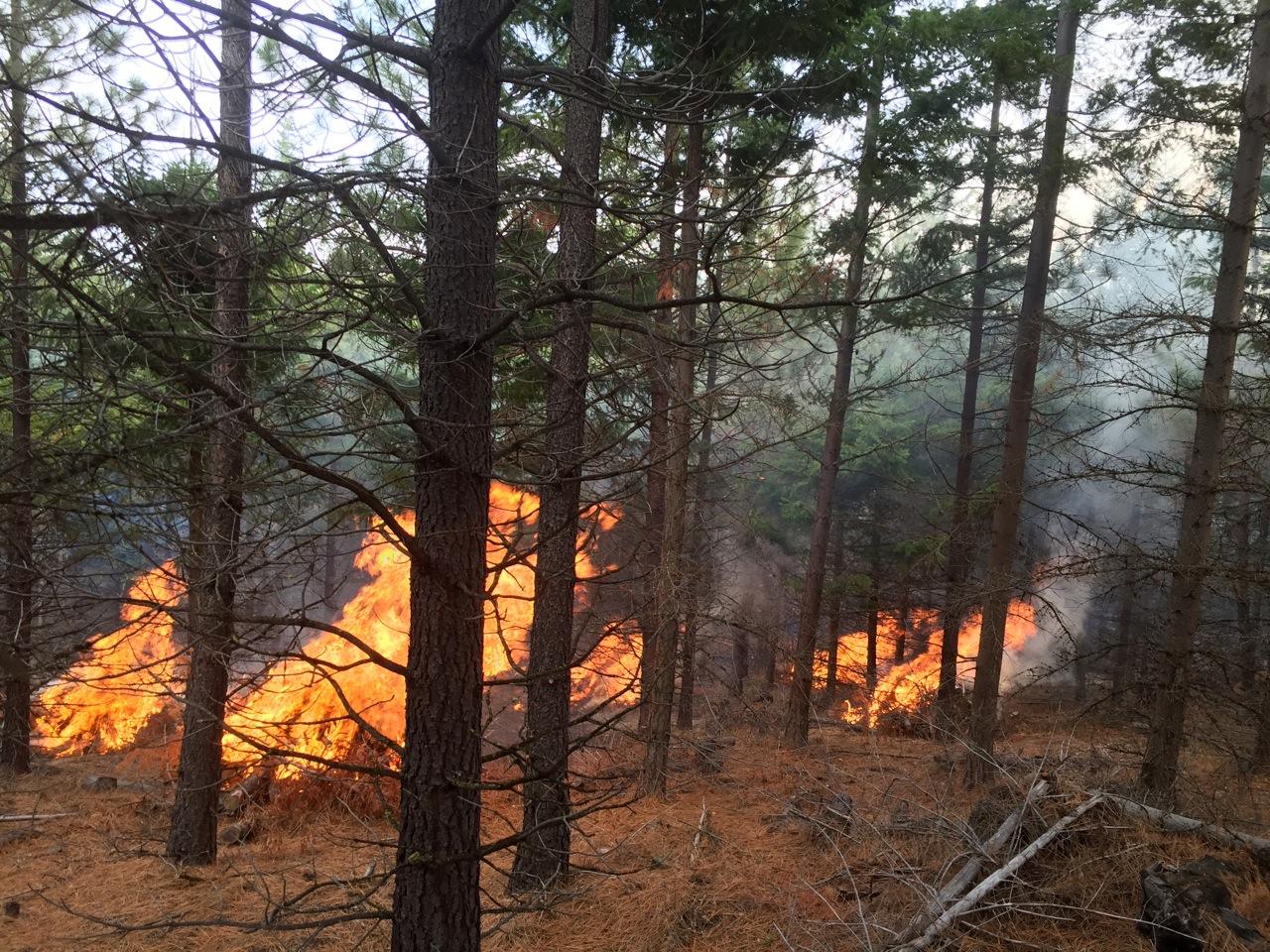 2016: Prescribed Fire Pilot Project
