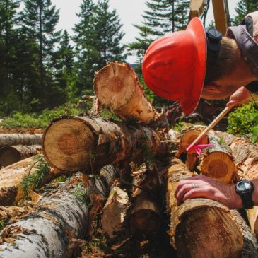 RESTORING THE FOREST: Restoration project aims to improve recreation and nature